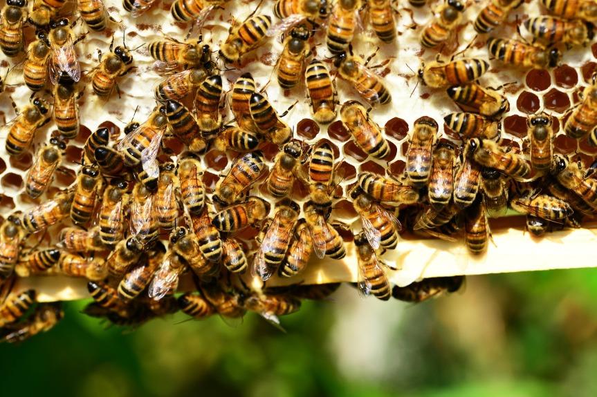 Bee kind toBees